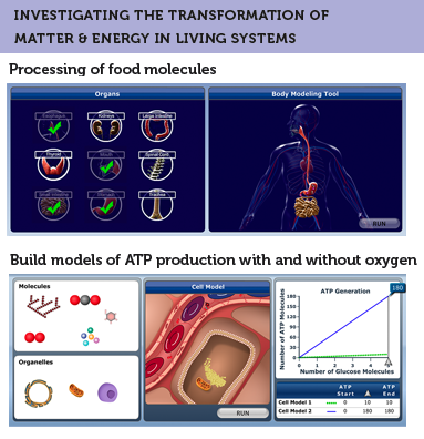 Anatomy of the SimScientists Human Body Systems suite